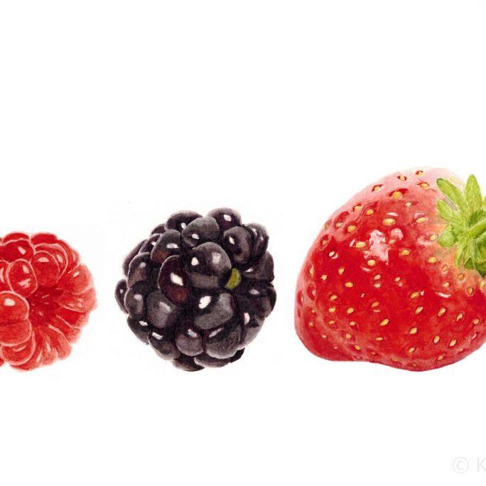The Berries Watercolor Painting by Kat Skinner