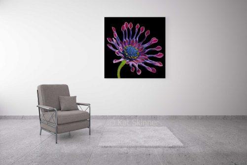 Cape Daisy Pastel Artwork, in Sitting Room, by Kat Skinner